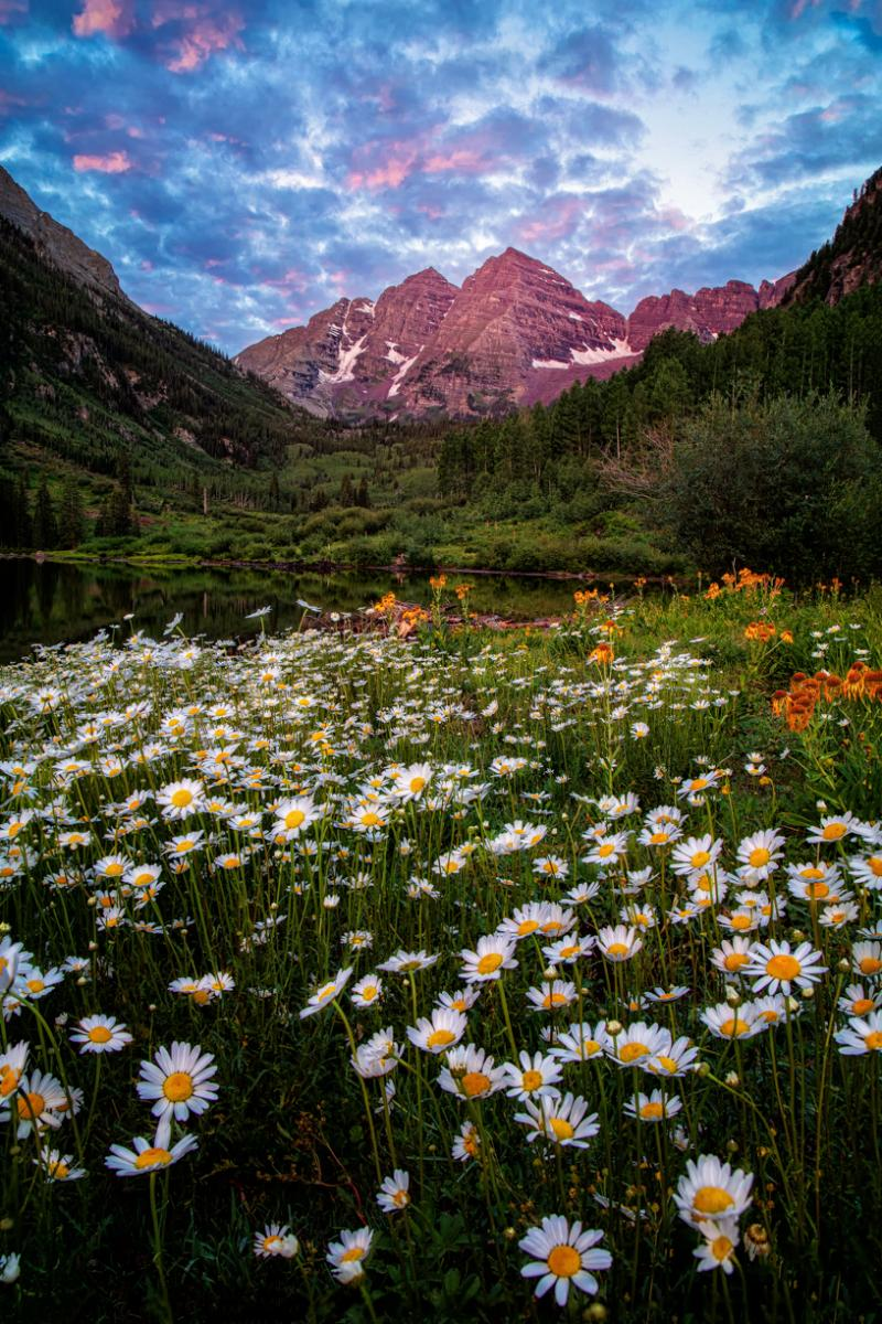 Photo of Maroon Bells and flowers