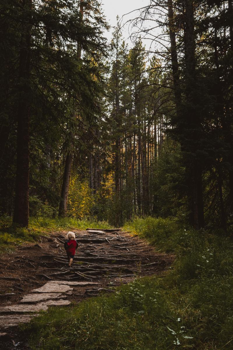 Photo of a child hiking while surrounded by towering trees