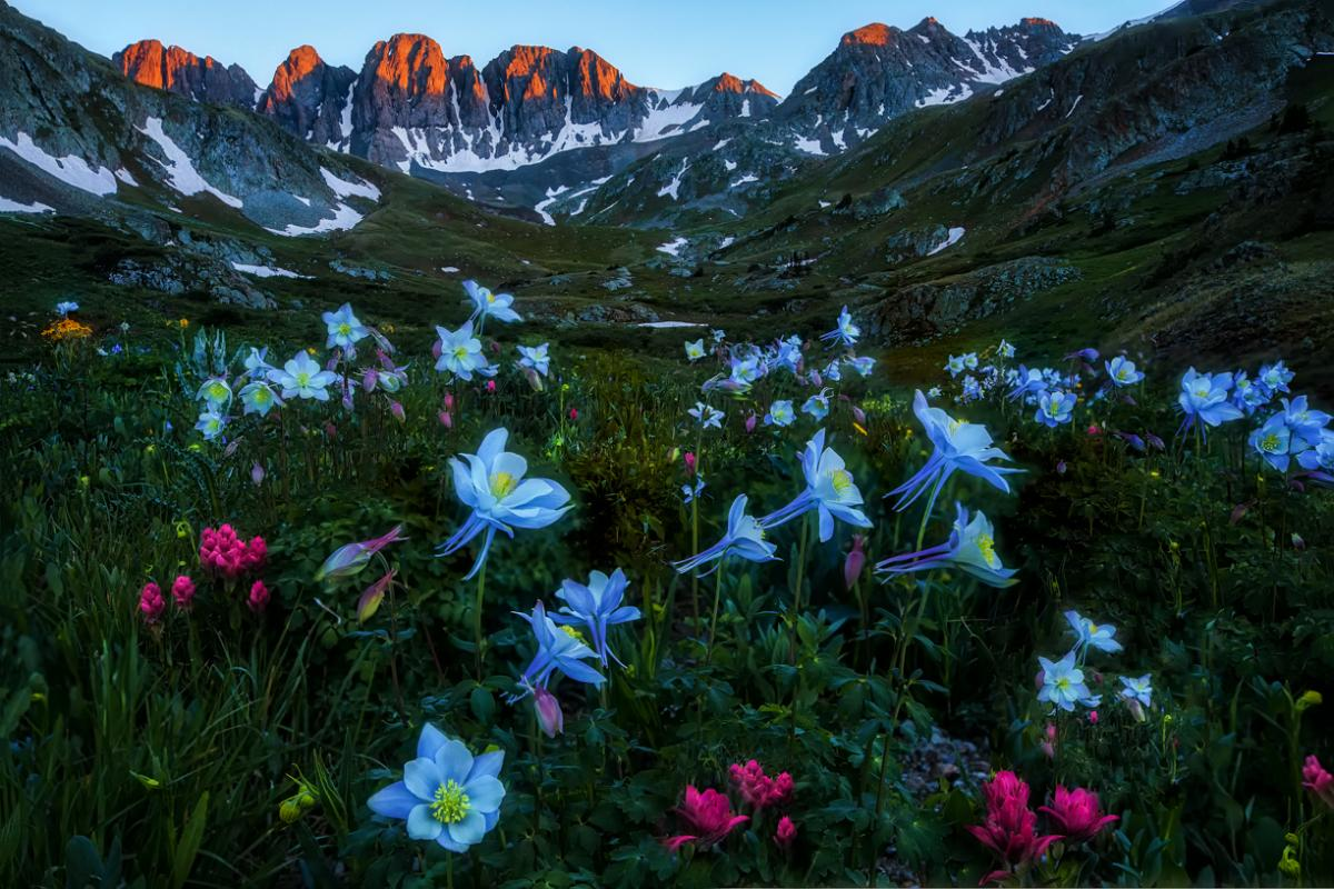 Photo of columbines and a sunrise on the mountains